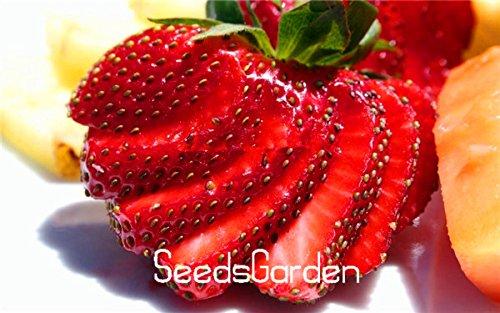 500 Pcs / sac super grosses fraises graines fournitures de jardin, parfum bonsaï maison et jardin, décor à la maison, # 0FNRCV