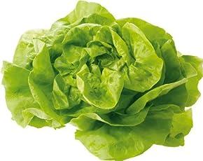 Obst & Gemüse Bio Salat Kopfsalat rot/grün samenfest (1 x 1 Stk)