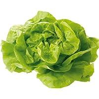 Obst & Gemüse Bio Salat Kopfsalat rot/grün (1 x 1 Stk)