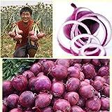 Risitar Graines - 100pcs Oignon rouge Noordhollandse Bloedrode Bio Productive, Graines de légumes jardin plante vivace résistante au froid