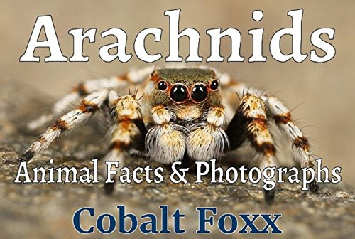 arachnids-animal-facts-photographs-volume-2
