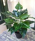 Künstliche Scindapsus Pflanze getopft ca. 40-45cm Top Qualität