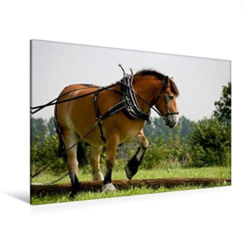 Calvendo Premium Textil-Leinwand 120 cm x 80 cm quer, Rückepferd bei der Arbeit   Wandbild, Bild auf Keilrahmen, Fertigbild auf echter Leinwand, Leinwanddruck Tiere Tiere (Biologie Der Nutztiere)