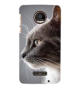 Fuson Designer Back Case Cover for Motorola Moto Z Force :: Motorola Moto Z Force Droid for USA (cat Fluffy Cat Pet cat Cute CAt Grey Cat)