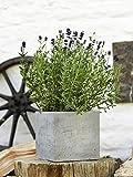 Beton Blumentopf der Beske-Manufaktur | Größe 17x17x17 |100% Handarbeit