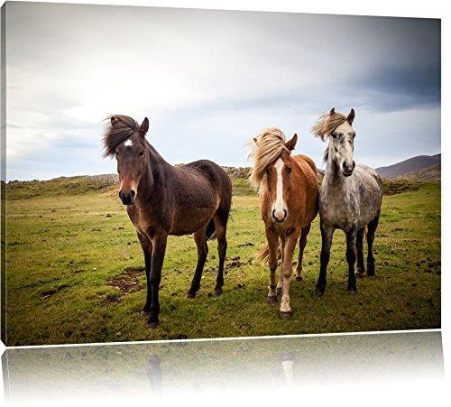 Drei wilde Islandpferde, Format: 100x70 auf Leinwand, XXL riesige Bilder fertig gerahmt mit Keilrahmen, Kunstdruck auf Wandbild mit Rahmen, günstiger als Gemälde oder Ölbild, kein Poster oder Plakat