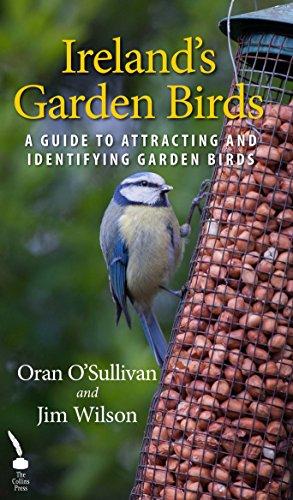 Long Blue Willow (Ireland's Garden Birds: A Guide to Attracting and Identifying Garden Birds)