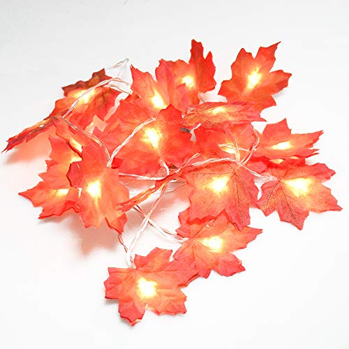 Cute maple lights