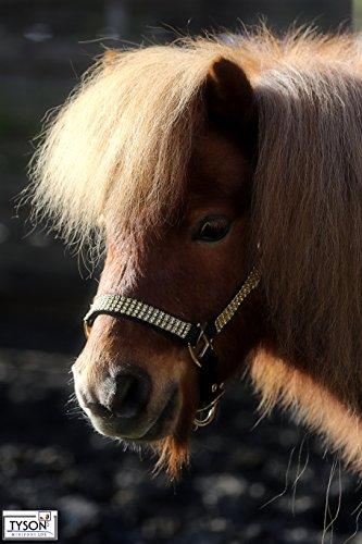 Halfter Hilly Go Goldfarben Glitzer wie Strass Minishetty Shetty Pony VB WB X- Full kleiner Kalter Tysons B- WARE !!! (P)