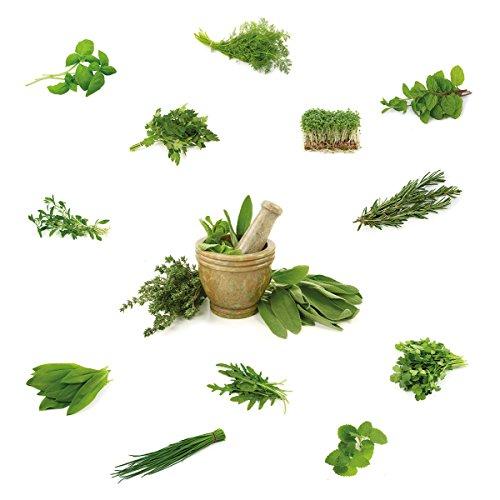 eurographics-ws-dt30053-different-herbs-windowsticker-sticker-70-x-25-x-04-cm-grun