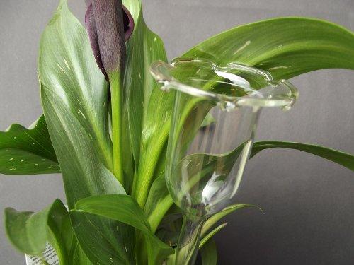 6 Stück, Durstkugel / Bewässerungskugel 3 cm, für kleine Pflanzen, mundgeblasen, frei geformt, Lauscha