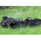 Hühner im eigenen Garten (Wandkalender 2017 DIN A2 quer): Hübsche und hochwertige Aufnahmen von glücklichen Hühnern, die im eigenen Garten leben (Monatskalender, 14 Seiten ) (CALVENDO Tiere)