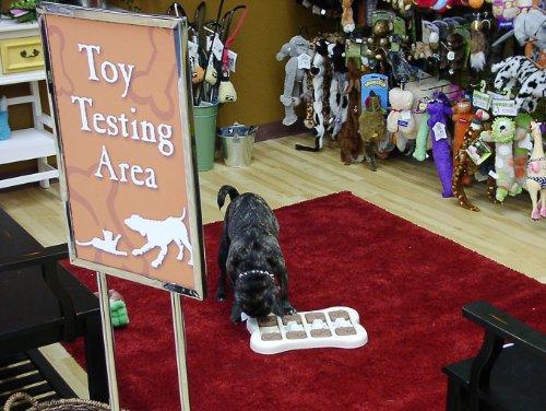 Plantilla de plan de negocios para una tienda de suministros de mascotas en español!