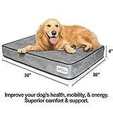 Best Pet Dog Crates - Petfusion Serenitylounge Lit pour chien Review