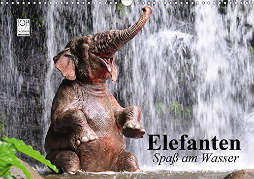 Elefanten. Spaß am Wasser (Wandkalender 2020 DIN A3 quer)