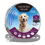 LiuXi pulce e Zecca Collare per Cani Deworming per Gatto e Cane Ingredienti Naturali di Olio Essenziale inodore Sicuro