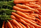 Splendour Seeds Carrot Seeds variety Kurodo Garden Vegetable Seeds . Color - Orange Grow these carrots at home for a garden fresh vegetable. These carrots grows easily and can be grown in bags,pots or ground soil. Seeds are sent in well packe...