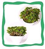 HL-PYL Garten Blumen Bonsai Pflanzen Ornamente Dekorativen Schmuck Home Einrichtung Office Desktop Simulation Kleine Topfpflanzen Sukkulenten, Unsterblichen Baum