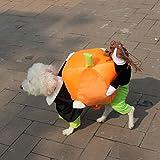ZILucky Halloween del perrito del animal doméstico ropa del gato del perro que lleva traje de calabaza Apparel Chaqueta (Large)