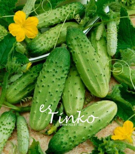 De nouvelles variétés de concombre arrivée Jardinerie plante concombre légumes Graines Cucumis Facile Plantation 30 pcs 05