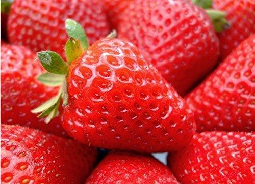 1000 PCS / Lot Red Climbing Strawberry Seeds Graines de fruits pour Maison & Jardin Bricolage Livraison gratuite Indoor