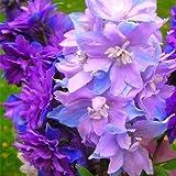 Pinkdose Nuovo arrivo! Bei 100% veri flores fiore di rododendro in vaso 24 varietà 100pcs / bag pianta rara bonsai giardino: cioccolato