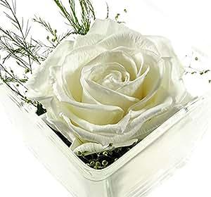 rosen te amo konservierte rosen blumen gesteck aus echte. Black Bedroom Furniture Sets. Home Design Ideas