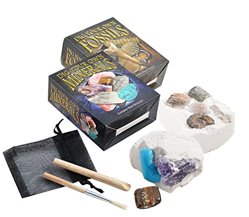 Set of 2 Dig Your Own Fossil & Mineral Kits - Small by Fossil Gift Shop