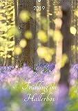 Frühling im Hallerbos (Wandkalender 2019 DIN A2 hoch): Naturschauspiel der blühenden Hyacinthen im Stadtwald von Halle, Belgien. (Monatskalender, 14 Seiten ) (CALVENDO Natur)