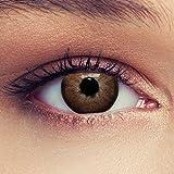 2 Braune Kontaktlinsen Haselnuss- braune farbige Kontaktlinsen Drei Montaslinsen + Gratis Behälter mit Stärke