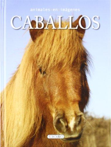 caballos-animales-en-imgenes