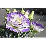 200pcs / Semillas bolsa multicolor Eustoma las plantas de interior con encanto lisianthus jardín de la flor en maceta de Bonsai envío