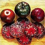 Portal Cool 100Pcs Schwarz Krim Tomatensamen russische Erbstück Gemüse, Obst, Bonsaipflanzen