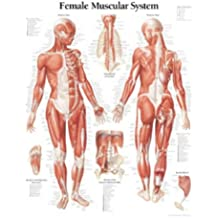 Muscular System with Female Figure Paper Poster