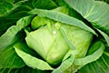SeeKay Cabbage First Early Market - appx 150 seeds - Vegetable
