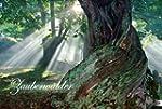 Zauberwälder 2014