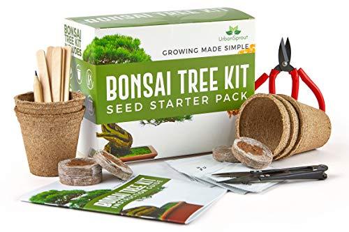 Zoom IMG-2 kit bonsai per crescere il