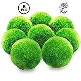 LUFFY Marimo Moss Balls - Ästhetisch schöne & gesunde Umgebung - Umweltfreundlich, pflegeleicht & begrenzen den Algenwachstum - Garnelen & Schnecken lieben sie