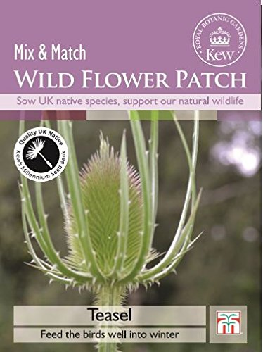 Thompson & Morgan Kew Wild Flower Patch Karde 100 Samen
