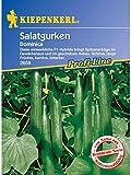 Salatgurken Gewächshaus Schlangengurke Dominica F1 resistent