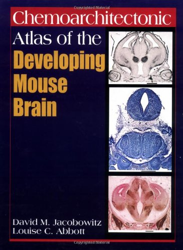 chemoarchitectonic-atlas-of-the-developing-mouse-brain