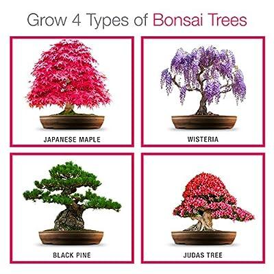 Züchte dein eigenes Bonsai - Züchte einfach 4 Arten von Bonsai-Bäumen mit unserem kompletten, anfängerfreundlichen Starter-Samen-Set - Einzigartige Geschenkidee von Grow Buddha Bonsai Kit bei Du und dein Garten