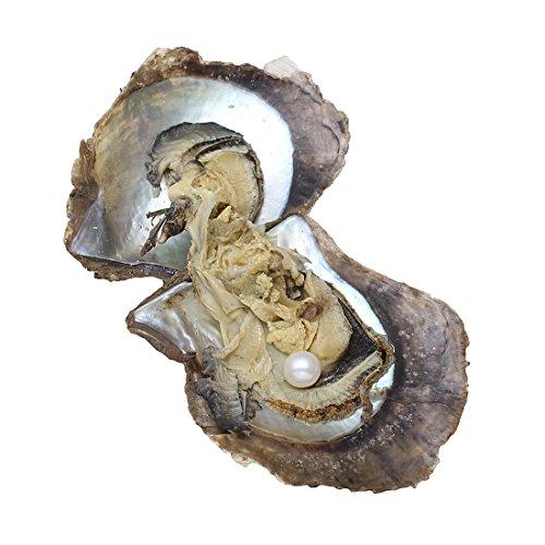 Regalos de aniversario con perlas de ostra Akoya. Perlas Redondas Cultivadas en el mar, de 7-8 mm. Ostras con Perla en el Interior., blanco