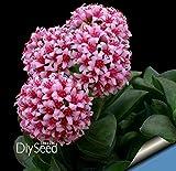 Les vrais bulbes de crocus safran, iran safran, (semences non safran), bulbes de fleurs, Happy Joy Fleurs, bonsaï plantes en pot pour la maison jardin-2bulbs