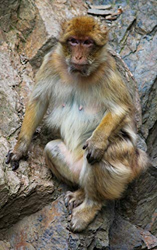 Notebook: Monkey macaque barbary Gibraltar primate mammal ape primate new world monkey old International Silver Orchid