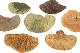 HUWI Spugna per Albero a Forma di Fungo, 500 g, Colore: Verde