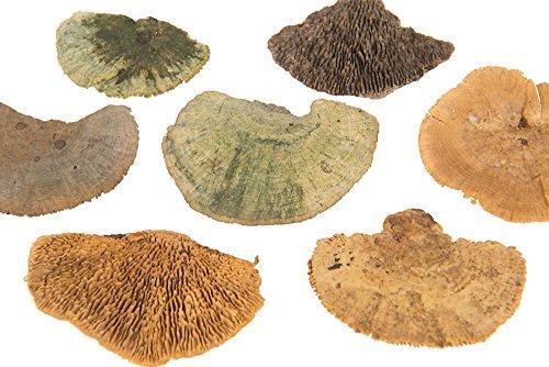 Baumschwamm Pilze klein grün Mix 500g Trockenfloristik Grabgesteck Waldkranz Bastelmaterial
