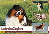 Australian Shepherd - Hütehunde mit Familienanschluss (Wandkalender 2019 DIN A3 quer): Bildkalender mit 13 wunderschönen Aufnahmen des Australian Shepherd (Monatskalender, 14 Seiten ) (CALVENDO Tiere)