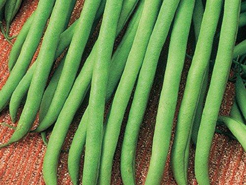 Stangenbohne - Fasold - ertragreich - grüne Schoten, schwarze Bohnen (50 Samen)