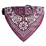 Ellaao Hundehalsband mit Namensschild, für Kleine und mittelgroße Hunde